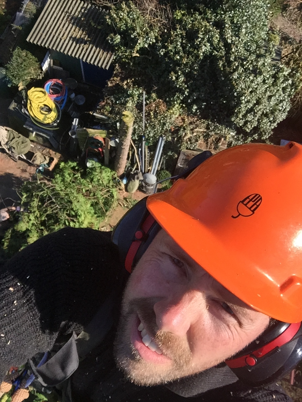 boom laten kappen in Eindhoven