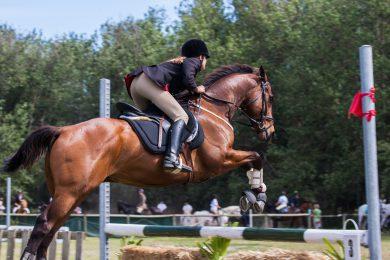 zweetdeken paard
