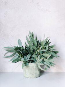 planten online bestellen